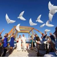 harga Balon Foil Burung Merpati Putih Tokopedia.com