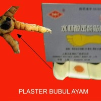 OBAT AYAM PLESTER BUBUL (BUBUL 3-4 HARI NGELUPAS)