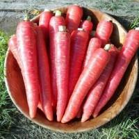 Benih / Bibit / Biji - Carrot Atomic Red / Wortel Merah - IMPORT