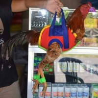 harga tas ayam / gantungan ayam Tokopedia.com