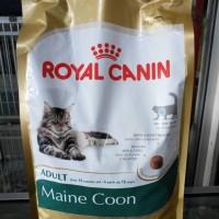 Harga Maine Coon Travelbon.com