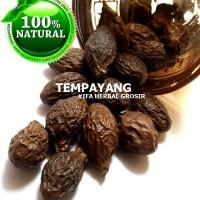 Jamu Herbal Tradisional Tanaman Obat Buah Tempayang u/ Panas Dalam