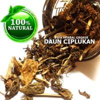 Jamu Herbal Tradisional Tanaman Obat Daun Ciplukan