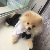 harga Baju hewan anjing kucing tuxedo formal Tokopedia.com