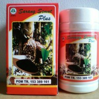 Kapsul Sarang Semut Papua