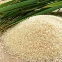 Organic pandan rice (beras pandan wangi organik)