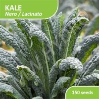 150 Seed - Benih Kale Lacinato / Nero Import