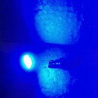 Bohlam Senja / Lampu Dasboard / Plat Nomor T10 LED BIRU BUNTUNG (Net)