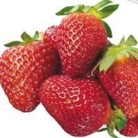 Benih Stroberi / Strawberry - Calibrated (Nutritious & Delicious)