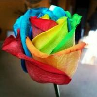 Jual Benih Biji Rainbow Rose - Import Murah