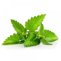 Bibit / Benih / Seed Herb Mint Spearmint Untuk Kuliner dan Relaksasi