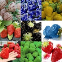 Benih Bibit Biji Buah Strawberry MIX/ Campur Color Import