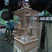 Sangkar Pleci ukir minimalis ISTIMEWA