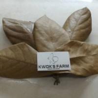 harga Daun Jackfruit Organic untuk pakan udang, pleco dll Tokopedia.com