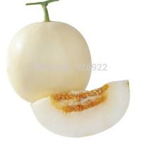 Bibit Biji Benih Buah Melon Putih Giant Unggul