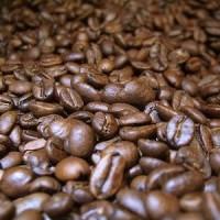 Jual Roasted Coffee Luwak Liar Gayo Murah