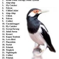 harga Speaker Audio Mp3 Bird Master Isian Biasa Jalak Suren Tokopedia.com