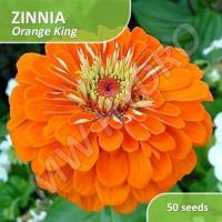 50 Seed - Zinnia Orange King (Benih Bunga Zinnia)