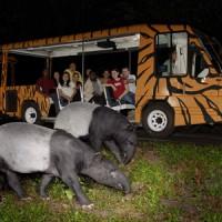 Promo Tiket Night Safari + Tram Singapore (Anak)