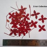 Bunga soka besar oshibana