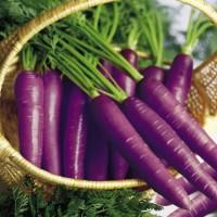 Harga benih bibit biji wortel ungu import uk inggris purple   Hargalu.com