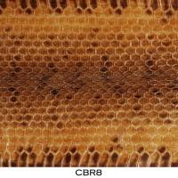 Bahan Kulit Ular Air / Cobra Asli Coklat Muda CBR8