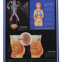 Carta (Poster) Sistem Urinari