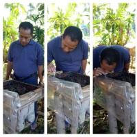 Jual madu kalulut / madu klanceng, asli dari hutan kalimantan Murah