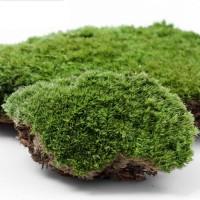 Jual paket terrarium real moss. mini garden Murah
