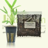 Benih/Bibit Kangkung 35 gr (700 biji) hidroponik/tradisional