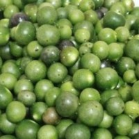 biji benih/tanaman leunca-atau-terong-kecil