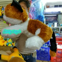 Jual mainan anak boneka kucing cat Murah