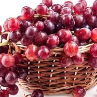 biji/benih/bibit buah anggur merah / red grapes import