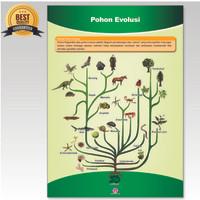 Poster Gambar Pohon Evolusi / Capta Biologi / Alat Peraga Biologi SMA