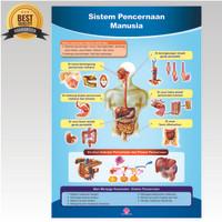 Poster Sistem Pencernaan Manusia / Capta Biologi /Alat Peraga Edukatif