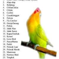 harga Micro SD Brainsmart Mastering isian Lovebird Tokopedia.com