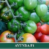 Benih Tomat Tomas / Ayuni / Ayunda 5 gram & Yasmin / Talisa 10 gram