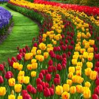 Colorful flowers bunga cantik indah lukisan repro menarik gambar murah