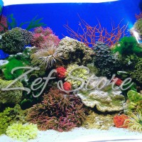 Gambar latar belakang akuarium - Aquarium background poster 50 cm (h)