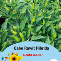 Biji/Benih/Bibit Cabe Rawit Centil