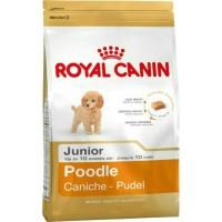 Makanan anjing junior poodle