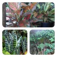 jual tanaman hias & pembuatan taman