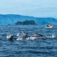 Paket Super Hemat Wisata Lumba-Lumba Teluk Kiluan