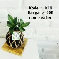 kokedama sansevieria hijau - snake plant - sansevieria lurik