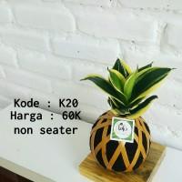kokedama sansevieria pagoda - tanaman hias unik