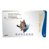 Info Obat Kutu Kucing Katalog.or.id