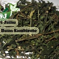 Harga jamu herbal tradisional daun sambiroto 100 gr untuk kencing   Pembandingharga.com