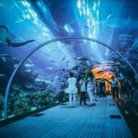 Jual Tiket Jakarta Aquarium Premium Murah