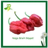 Benih Biji Naga Brain Red Pepper-Isi 5 Biji