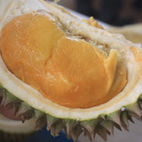 bibit durian duri hitam siap tanam kualitas ok